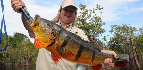 exotic fishing trips - amazon fishing - peacock bass fishing, Fishing Reels
